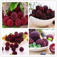 10 PCS Arbutus 씨지 아지노 딸기 식물 나무 맛있는 중국 과일 금융 건강과 집 정원 쉬운 성장
