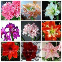 500 개 씨앗 이국적인 아마 릴리스 분재 저렴한 중국어 꽃 식물 바베이도스 백합 화분에 심은 식물 발코니 플로르 홈 정원 심기에 대한