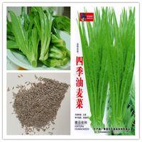 1 paquete original del paquete cuatro estaciones lechuga en macetas verduras hierba bonsai semillas de flores de plantas de venta resistente perenne Bonsai Plant caliente