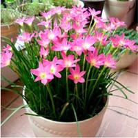 Большая распродажа! 100 шт. Семена орхидеи Орхидея Растения Phalaenopsis Bonsai Цветок Рассада для дома Садовый горшок несколько сортов Бесплатная доставка