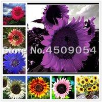 Смесись цвет карликовых подсолнечника редкий цветок семена фортуны подсолнечника горшечные бонсай для домашнего сада посадка легко выращивать 60шт / сумку