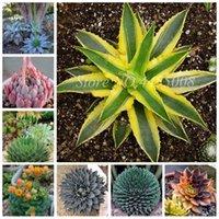 200 PCS Semillas Mixtas Aloe Cacti Agave Bonsai Plantas suculentas raras de Agave-Americana Potted Agave Plants for Home Garden Decor