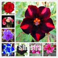 판매 5 PC / 가방 희귀 미니 사막 장미 식물 씨앗 발코니 분재 장식용 꽃 Adenium obesum 분재 포름 알데히드 흡수