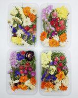 1 Box 30g Getrocknete Blumen reale trockene Pflanzen gepresste Blumen für Aromatherapie Kerzenherstellung Fertigkeit DIY Zubehör