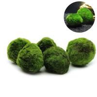 5pcs Marimo Moss sfera piante d'acquario terrario Cladophora sfera Fish Tank Ornamenti