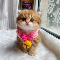 Nette gestrickte Pet Lätzchen Kragen Kawaii Warm Bandanas Katze Schal Kleine Milch Dog Lätzchen Kleidung Katze Schal