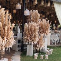 8/10 / 20pcs Natural Fondo secado boda caña de la flor hierba de pampa Decoración de boda Decoración Granja Natural Pampas Grass