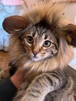 Gato engraçado bonito Pet Costume Lion Mane Wig Cap Hat para Dog Cat Natal roupas de Halloween do vestido extravagante com orelhas roupas para cães