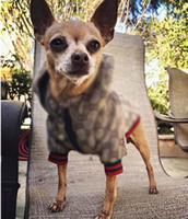 Ao Ar Livre Pet Dog Cão Vestuário Clássico Padrão De Forma Ajustável Pet Arneses Casaco Bonito Teddy Hoodies Terno Pequeno Cão Colares Acesso