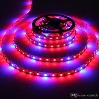 Lámparas LED Phyto Lámparas Full Spectrum LED Luz de tira 1m 60 LEDs 5050 LED Crece luces para la planta hidropónica de invernadero