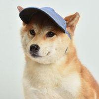 ПЭТ Шляпа с ушными отверстиями Регулируемая бейсболка для больших средних маленьких собак Летняя собака Cap Sun Hat Открытый Пешие прогулки Pet Products