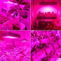 Vente chaude 2000W Dual Chips 380-730nm Spectrum de la lumière pleine lumineuse LED Lampe de croissance de la plante Blanc Grow Brillez en gros