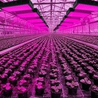 1800W 180 * 10W 전체 스펙트럼 3030 라이트 비드 식물 램프 단일 제어 블랙 실내 프리미엄 소재 성장 조명