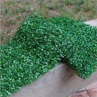 Arredamento della parete dell'erba artificiale dell'erba artificiale del tappeto erboso del tappeto erboso 60x 40cm per la decorazione del giardino Trasporto libero
