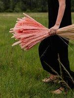 Bündel Natürliche getrocknete Binse kleine Pampas Gras Phragmiten Communis Reed Fotografie Pflanze Hochzeit Blume Wohnkultur