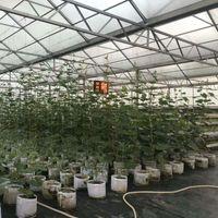 11 حجم أكياس النبات غير المنسوجة قابلة لإعادة الاستخدام لينة تنفس للغاية تنمو الأواني زراعة حقيبة مع مقابض رخيصة الثمن كبير زهرة partee 11 L2