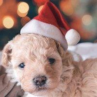 الحيوانات الأليفة عيد الميلاد القبعات عيد الميلاد الصغيرة أفخم قبعة سانتا ل كلب القط قبعة عيد ميلاد سعيد زينة عيد الميلاد للمنزل كاب GWB10104