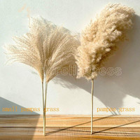 Real Pampas Grama Decor Natural Flores Secas Plantas Flores De Casamento Flores Seco Buquê Fluffy Lovely for Holiday Home Decor Fast Ship