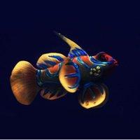 Silicone acquario Pesci della rana di pesci della decorazione artificiale verde acceso Acuario Decor Pretty Cute Micro Ornamento per serbatoio