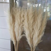 3pcs 55CM 80CM Natural Reed Dried Flower Big Pampas Grass Bo...