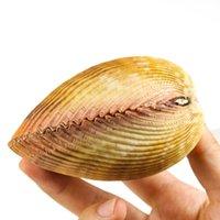 Gigante cáscara de concha cáscara cáscara dinocardio robustum acuarios espécimen marino conch tanque decoraciones artesanía bricolaje paisaje h bbyfhb