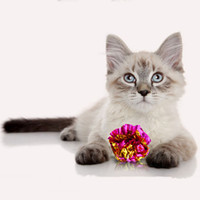 Кошка игрушка оловянная фольга красочные кольца бумаги блестящий интерактивный звуковой мяч морские шарики кошек звуковые игрушки питомцы играют шары vtky2351