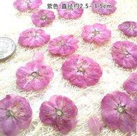 10pcs / lot de romance Cerisiers Pressé matériaux de fleurs séchées Fleurs Préservé pour bookmark colle cristal carte bougie