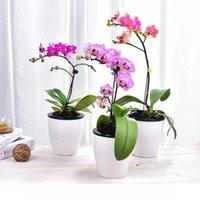 Fleurs artificielles de soie 1PC Phalaenopsis 5 têtes de mariage papillon d'orchidée pour la décoration de fête de festival à domicile1