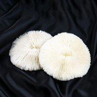 1 قطعة البحر الطبيعي المرجانية شل محارة الفطر المرجانية عينة الأسماك خزان الحوض الديكور اكسسوارات مائية الحيوانات الأليفة اللوازم H SQCKTD