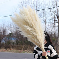 Natural Plant Pampas Grass Large Dried Flower Wedding Specia...