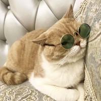 Bonito animal de estimação cão gato retro moda óculos de sol óculos transparente olho desgaste cosplay óculos pet pet pet suprimentos suprimentos de gota