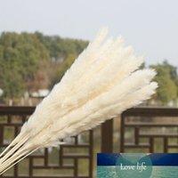 المجففة 15X الطبيعية السهوب العشب ريد الرئيسية زفاف زهرة بانش ديكور
