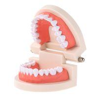 Modelo de enseñanza de dientes infantil dental Modelo de dientes adultos Herramienta de demostración estándar para niños estudiando