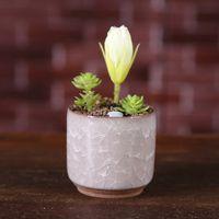 الجليد متصدع البسيطة السيراميك زهرة وعاء الملونة الزهور لسطح المكتب الديكور لحمي بوعاء النباتات المزارعون 8 ألوان البحر الشحن HHE4223