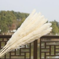 15 adet bir demet doğal kurutulmuş pampas çim reed ev düğün çiçek demet dekor için düğün süslemeleri