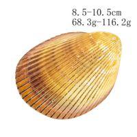 Concha gigante Conch Cáscara de cáscara Dinocardio Robustum acuarios Espécimen Marine Conch Tank Decorations Crafts DIY Landsap H JLLSQK