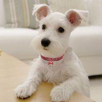 Cuello de gato de perro Cristal Bling Rhinestone Dom Puppy Collar Collares Correa para pequeños perros medianos Joyería de diamante DDA2590