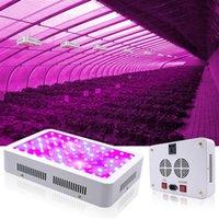 뜨거운 판매 1000W 듀얼 칩 380-730nm 전체 빛 스펙트럼 LED 식물 성장 램프 흰색 상위 학년 재료 성장 조명