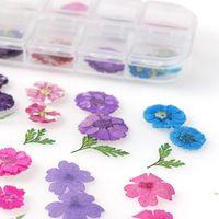 Fleurs séchées japonaises 12 pétales Véritable fleur de fleur éternelle Photo Thérapie Crystal Boîte de cristal pour UV Résine Epoxy Mould de Jllcsg