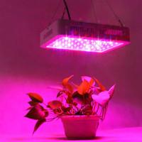 600W 듀얼 칩 380-730nm 전체 빛 스펙트럼 LED 식물 성장 램프 화이트 고품질 성장 조명 실내
