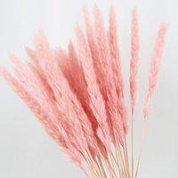 15 ADET Doğal Kurutulmuş Küçük Pampas Çim Fragmites Düğün Çiçek Bunch 40 ila 68 cm Uzun boylu Otel Ev Decor1