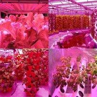600W 듀얼 칩 380-730nm 전체 빛 스펙트럼 LED 식물 성장 램프 화이트 높은 품질 성장 조명