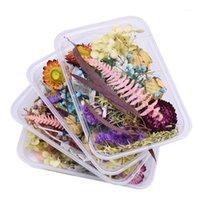 1box mixte coloré véritable fleur séchée mini plante éternelle pressée bricolage art scrapbooking artisanat bougie décalque de mariage fournitures1