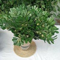 2020 5 شوكة الفول السوداني الأخضر والعربات يترك محاكاة الحرير مصنع المنزل سطح المكتب الديكور 54 سنتيمتر النباتات الاصطناعية diy الزفاف