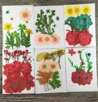 Hojas de hojas secas prensadas mixtas + Flores Plantas Herbario para joyería Estuche Teléfono Postal Scrapbook Craft Accessories DT01-06