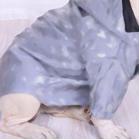 Yansıtıcı Pet Coats Vintage Mektubu Çiçeği Köpek Ceket Aydınlık Güzel Yavru Ceketler Chihuahua Bulldog Bichon Schnauzer Için