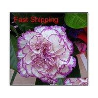 Продвижение 10 цветов доступно гвоздики для гвоздики многолетних цветов горшечные садовые растения Dianthus Caryophyl Qyluph BDE_LUCK