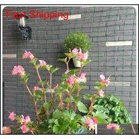 Cerca de jardín de 6 pies Millipore Nylon Net Red MARCO DE PRINCIPIA GARANTÍA NET PLANTE CERCA ANTI-BIERD RED PLAN DE VEGETALES QYLZFB TOYS2010