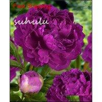 10 pcs / sac Couleur mélangée Graines de pivoine chinoise arbre de rose pivoine graines beaux décoration bonsai fleur plante jllush mxyard