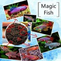 Killifish Blind Box Grow Magic Soil Frh Water Fish Killi Caviar Live Tank Eggs Hatching Earth Pet Educational Toys Home